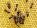 Bienenhonig ist für das Baby tabu