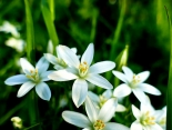 Bachblüten-Therapie: Vielversprechend bei Kindern