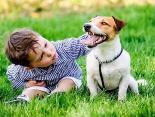 Wickelkind trifft Fellschnauze: der Familienhund